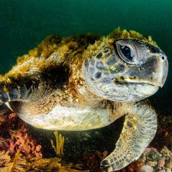 La Jolla - Full Day Snorkel Rental