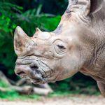 Visit the San Diego Zoo Safari Park
