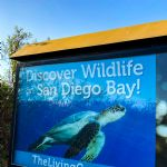 Visit Living Coast Discovery Center