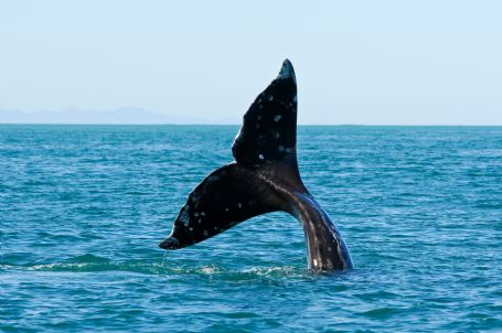 Half Day Whale Watching Tour